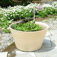 オリジナル睡蓮鉢ベージュとこんもりムチカの簡単ビオトープセット 流木付き  (休眠株)