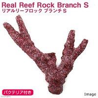 Real Reef Rock Branch(リアルリーフロックブランチ) バクテリア付き Sサイズ(1個)(形状お任せ)