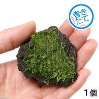 巻きたて 南米ウィローモス 富士ノ溶岩石 ミニサイズ(約4~6cm)(無農薬)(1個)
