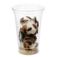 レッドローチ Lサイズ 1カップ分 爬虫類 大型魚 餌 エサ