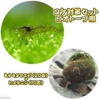 コケ対策セット 用 ミナミヌマエビ(20匹) + ヒメタニシ(10匹)