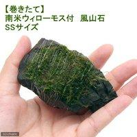 巻きたて 南米ウィローモス 風山石 SSサイズ(8cm以下)(無農薬)(1個)