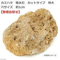 カミハタ 吸水石 カットタイプ 特大 穴サイズ 約1cm テラリウム パルダリウム 着生 コケ