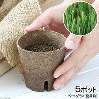 長さで選べる ペットグラス 直径8cmECOポット植え(発芽前)(無農薬)(5ポット) 猫草