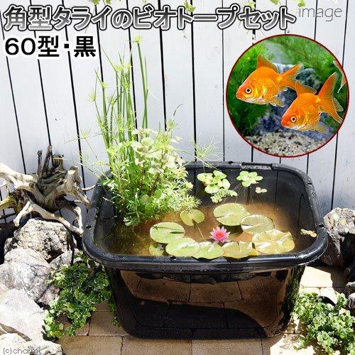 (ビオトープ)(金魚)角型タライのビオトープセット(60型・黒) 温帯性睡蓮(桃)+水辺植物+琉金+他用品 説明書付き 本州・四国限定