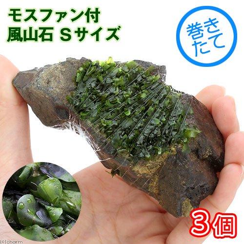 (水草)巻きたて モスファン付 風山石 Sサイズ(約10cm)(無農薬)(3個)