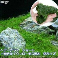 ヘアーグラス ショート+巻きたて ウィローモス 流木 SSサイズ(約10cm)