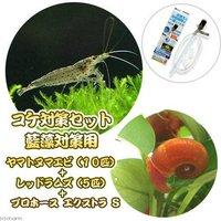 コケ対策セット 藍藻対策用 ヤマトヌマエビ10匹+レッドラムズ5匹+プロホースエクストラ S