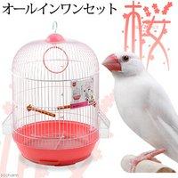 マルカン バードパレス ロイヤル桜 (幅41×奥行き33.5×高さ52.5cm) 小鳥 鳥かご ケージ