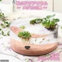 私のアクアリウム ~メダカの泉~ ピンク フラットグラス(直径25×H9cm) 飼育セット