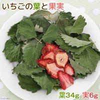 国産 いちごの葉と果実 40g 小動物のおやつ うさぎ ハムスター 無添加 無着色