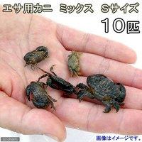 カニ 生餌 エサ用カニ ミックス Sサイズ(10匹)