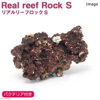 Real Reef Rock(リアルリーフロック) バクテリア付き Sサイズ(1個)(形状お任せ)