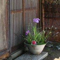 国産 手作り睡蓮鉢 益子焼 彩(SAI) 渦潮 信楽 直径約50cm