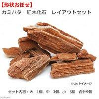 カミハタ 紅木化石 レイアウトセット 形状おまかせ