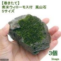 巻きたて 南米ウィローモス 風山石 Sサイズ(約10cm)(無農薬)(3個)