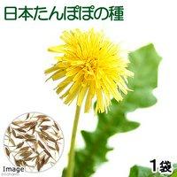 日本たんぽぽの種(1袋) 日本蒲公英 栽培 家庭菜園 種子