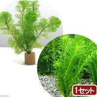 ライフマルチ(茶) メダカ金魚藻セット(1セット)