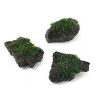 巻きたて ウィローモス 富士ノ溶岩石 ミニサイズ(約4~6cm)(無農薬)(1個)