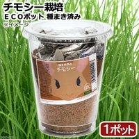 種まき済み チモシー栽培 ECOポット(1ポット)