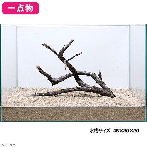 一点物 極上流木単体 45cm水槽用 232968