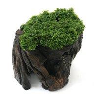 一点物 プレミアムグリーンモス 切り株流木(450086)(無農薬)(1個)