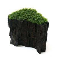 一点物 プレミアムグリーンモス 切り株流木(450080)(無農薬)(1個)