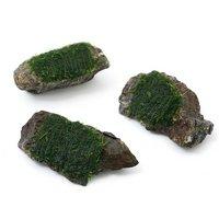 巻きたて ウィローモス 風山石 SSサイズ(8cm以下)(無農薬)(3個)
