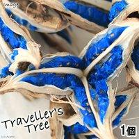 旅人の木の実 Mサイズ(1個) インテリアオブジェ 北海道冬季発送不可