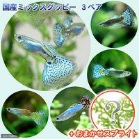 (水草)国産ミックスグッピー(3ペア)+スプライト1種(3株セット)