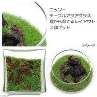 ニッソー テーブルアクアグラス 種から育てるレイアウト 2個セット