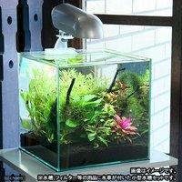 私のアクアリウム~小型水槽用水草豪華12種セット~アクロ27水槽セット 北海道・ 基本