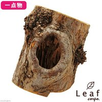 一点物 長野県小布施産 天然素材のりんごの木オブジェ AP-009 レイアウト