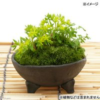 手作り山野草鉢 益子焼 足付丸小皿 みかげ 鉢底穴あり 直径10cm ミニミニ盆栽鉢
