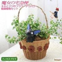 ジブリプランターカバー キキとジジのフラワーデリバリー 観葉植物セット(プミラ サニーホワイト)(1セット)