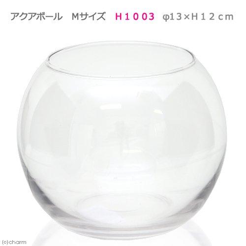 アクアボール Mサイズ H1003 エアプランツ 多肉植物 ティランジア ガラス