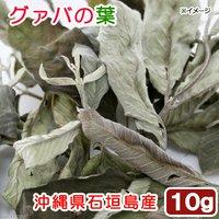 沖縄県石垣島産 グァバの葉 10g 小動物のおやつ 国産 無添加 無着色