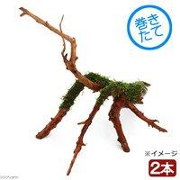 巻きたて おまかせモス付き ブランチアーチ流木(無農薬)(2本)