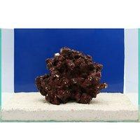 一点物 Real Reef Rock(リアルリーフロック)(Lサイズ) RR-016(1個)