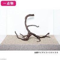 一点物 極上流木単体 45cm水槽用 224615