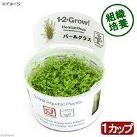 組織培養1-2-GROW! パールグラス トロピカ製(無農薬)(1カップ)