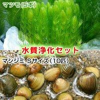 水質浄化セット マツモ(5本) +マシジミ Sサイズ(10匹)