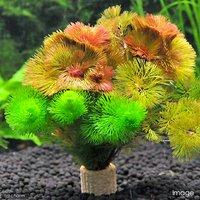 メダカ金魚藻 ライフマルチ(茶) カボンバミックス(1個)