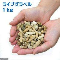 ろ材 バクテリア付き ライブグラベル(1kg)