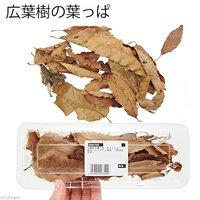 広葉樹の葉っぱ 約250ml 昆虫 レイアウト用品 ザリガニ (形状お任せ)