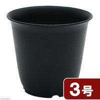 プラ鉢 3号 黒 多肉植物 植え替え