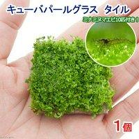 (水草)ミナミヌマエビ(10匹)+キューバパールグラス タイル(無農薬)(1個)