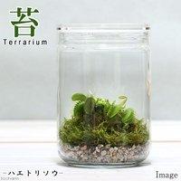 苔Terrarium ハエトリソウ ガラスボトルL 説明書付 テラリウムキット