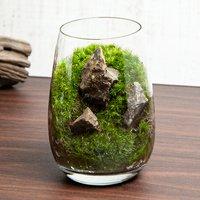 苔テラリウム 風山石 グラス レイアウト完成品(1個)