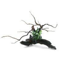 自在流木 アヌビアスナナ プチ付 Sサイズ(1本)(約15cm)